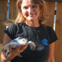 Master of Science (focus on conservation genetics of turtles) offers maths, science, english lessons + more