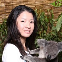 Private/Group Japanese Native Qualified Tutor/Teacher にほんご せんせい on the Gold Coast 日本語 先生 Southport